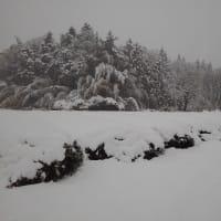すっかり雪景色。