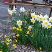 春・Spring
