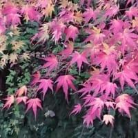 淡路島 家庭教師 淡路教育サービス有限会社通信 10月24日(木)