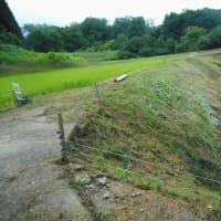 山間の田圃・・・草刈三昧の一日・・・雑草だけは何故か元気です。