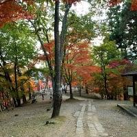最上山公園 紅葉 '19