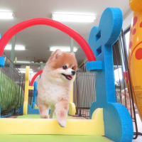 幼稚園体験にきてくれた【るなちゃん】&【チノちゃん】&【ロイくん】 犬のしつけ教室@アロハドギー