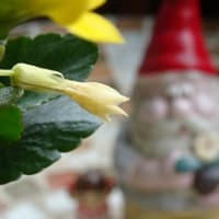 守山の余韻な花々③朱色と黄色