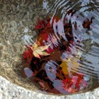 鶏足寺の紅葉 その7