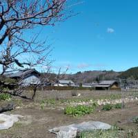 茨城県北2019年の春・・山里のコイノボリ