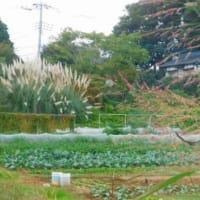 中木戸公園~七次調整池~神崎川源流~白井市役所