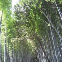 初めて、京都嵐山へ行く