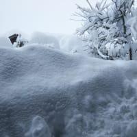 雪のピークはいつだ?