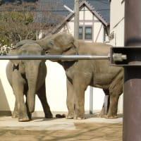 初!徳山動物園