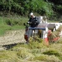 最後の稲刈り、終了!今年は、稲刈り時期の天候に恵まれ、順調に作業できました。まだ籾摺りが残っていますが、とりあえず雨が降っても大丈夫です。