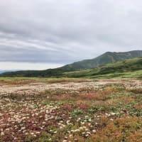 【大雪山国立公園・旭岳情報】花畑の季節です。 - NPO法人大 ...