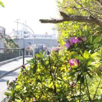 40年ぶりの野毛山動物園訪問16