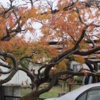 落葉の整理