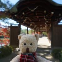 ミモロの紅葉情報。「平安神宮」の神苑を巡り、秋を楽しむ