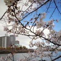 大阪造幣局の対岸から