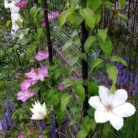 折り合いを付けながら、、庭。