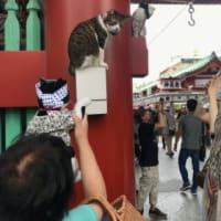 雷門に猫たち(笑)