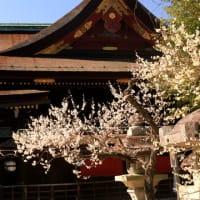 早春・京の街歩きⅡ