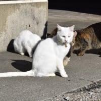 岸壁のネコ達5