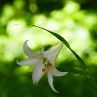 とっとり花回廊 期間限定秘密の花園 動画有り