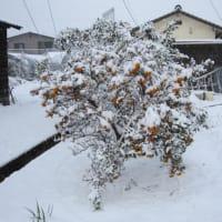 山口県に大雪・なだれ・落雪注意報だって?