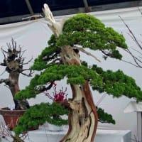 2020熊本市植木市