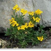 壁に咲く花