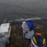 梅雨荒れの南で2枚釣る