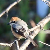 自宅から15分圏内に生息している野鳥
