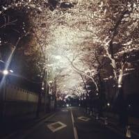 2021年3月24日の「テヨンの桜通り」です。東京は新型コロナウイルスの緊急事態宣言は解除されましたが、リバウンド警戒の真っ最中です