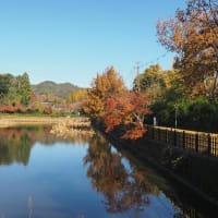 紅葉なごり散策 天龍寺、宝厳院、亀山公園展望台、竹林の道