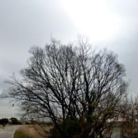 真冬に梅雨?…多摩川冬景色シリーズ
