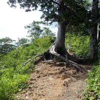 三ノ峰~別山 花の稜線を行く(復路)