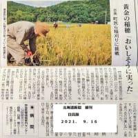 稲刈りの様子が新聞に・・