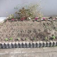 春に向けて花の植えかえをしました!