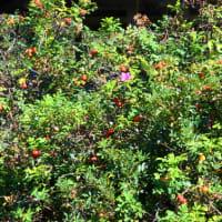 彩り溢れる秋の蓼科。