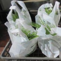「10月の講習会」~玉葱・そら豆の上手な育て方~