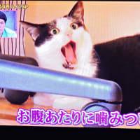 12/15 猫や犬の表情を見ていると、ハイジと会話して反応している
