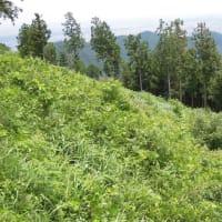 マッキーの山登り:景信山の山歩き