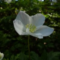 フィナーレは華やかに♪~京都府立植物園5月 (7)