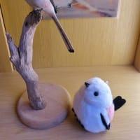 シマエナガちゃん Long-tailed Tit
