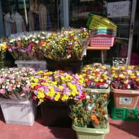お花がたくさん(・∀・)♪