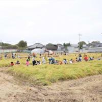 稲刈り体験2019を開催しました。