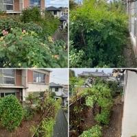枝が伸び放題となり踏み入れることが出来なくなったお庭の手入れ作業