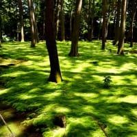 【令和元年度夏第二弾 海の京都・伊勢・奈良を巡るひとり旅の巻13(最終)】