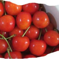 サクランボは果実の宝石