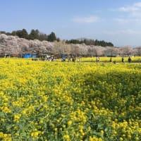 2020群馬の観光、春、赤城千本桜🌸