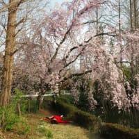 桜の咲く季節に