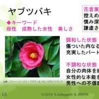 第19回JPHMA学術大会で発表した症例をご紹介します。