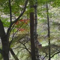 赤い灯が暖かく灯る森を見つめてコーヒー飲めば心穏やかとなる。